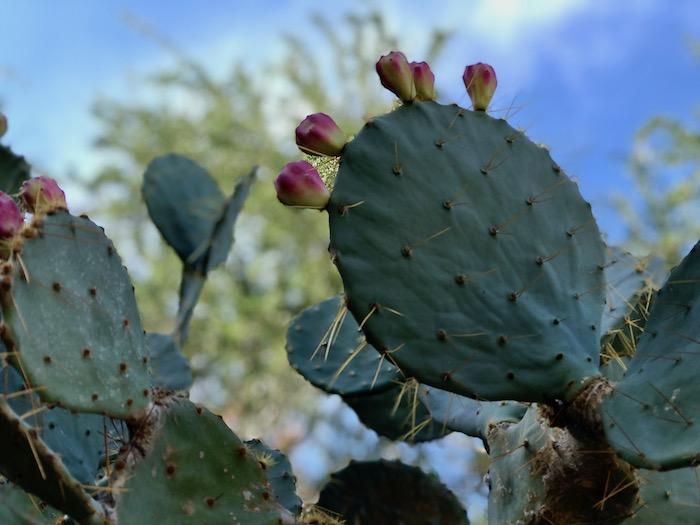 Visit Moorten Botanical Gardens Palm Springs