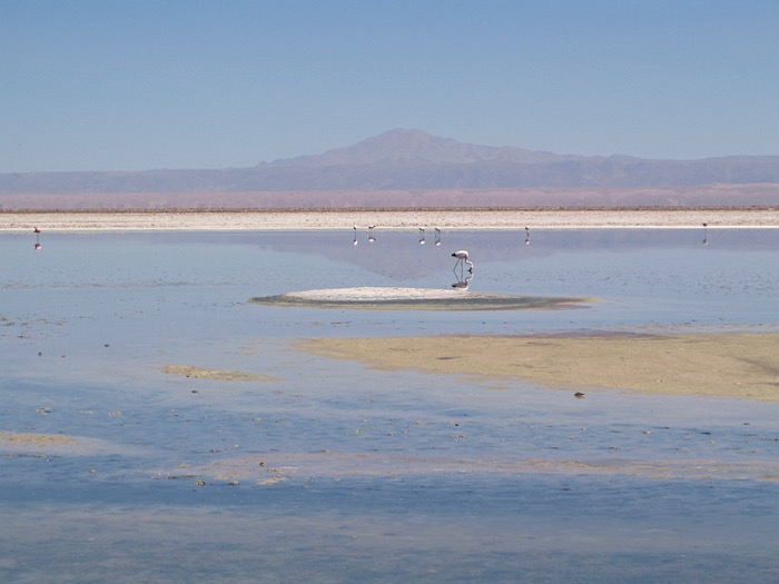 Things to do near San Pedro de Atacama visit Salt Flats