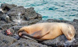 Baby sea lion Galapagos animals