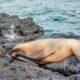 Reverse culture shock, a sad baby seal