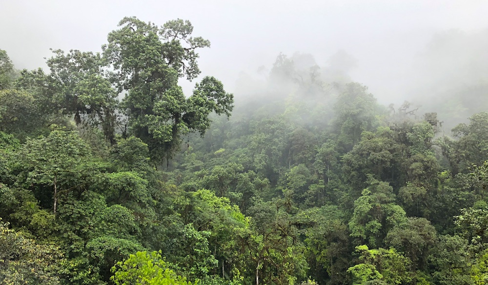 Cloud forest Ecuador