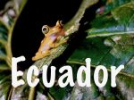Travel to Ecuador