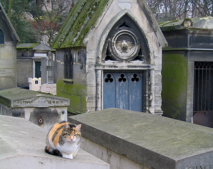 Cat at Pere Lachaise Cemetery in Paris
