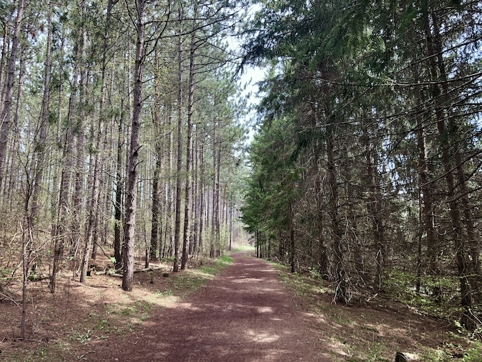 Hiking trail at Mono Cliffs Provincial Park in the forest