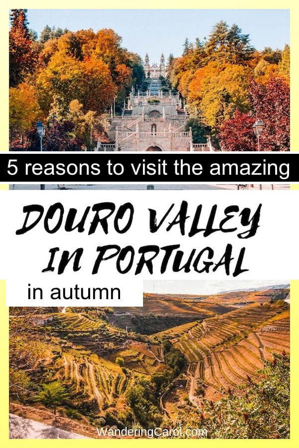 Here are 5 reasons to visit the Douro Valley of Portugal, especially in fall, when the leaves are golden and red. Known for port wine, and only an hour from Porto, this top destination in northern Portugal is ideal for river cruises, road trips, wine tasting and beautiful landscape. It also makes a great day trip from Porto. #Portugal #northernPortugal #Autumn #fall #travel #Europe #fallcolours #leafpeeping #triptoeurope