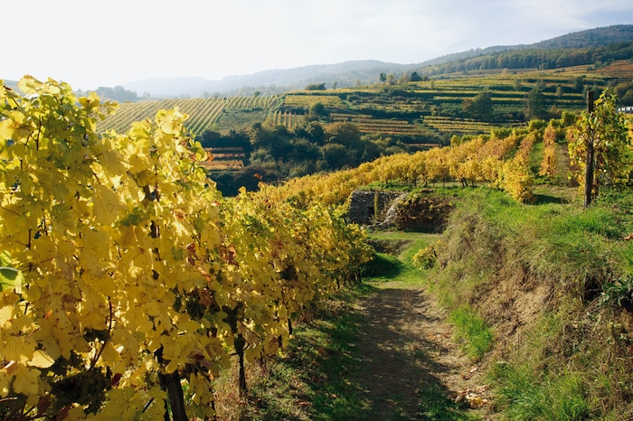 Vineyards near Krems Austria