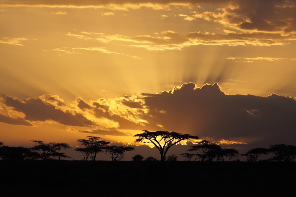 golden sunset in south africa