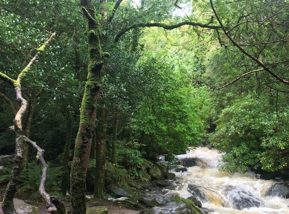 torc waterfall in killarney national park with moss covered trees